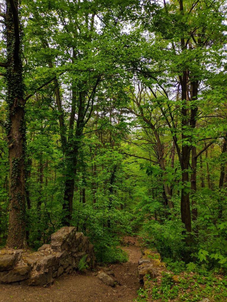 Las miejski w Bolesławcu